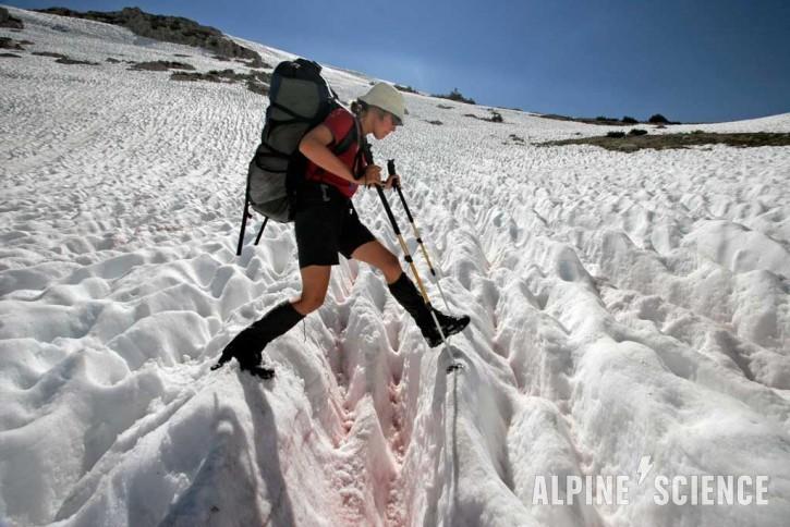 Pacific Crest Trail Snowcups